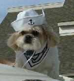 Dog Captain