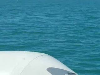 Add Comment To: Dolphin's in the gulf putting on a show for me 2