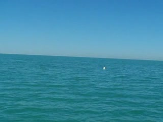 Add Comment To: Dolphin's in the gulf putting on a show for me 4