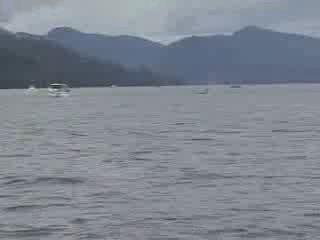 Killer Whale Sushi from:boatfreak